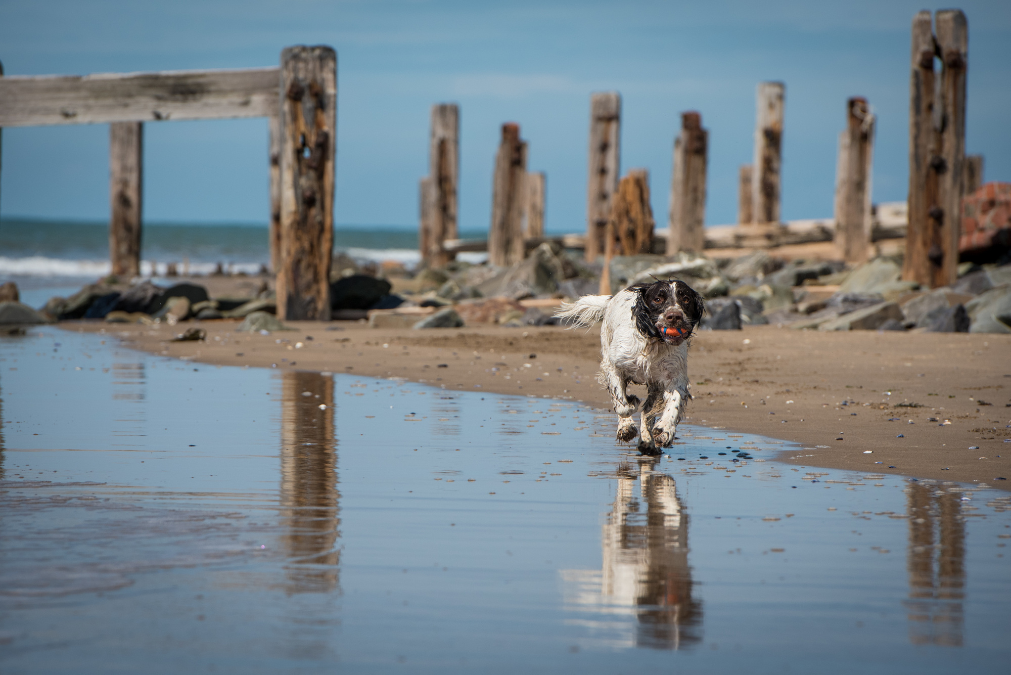 8 Dog-friendly Beaches in Devon and Cornwall