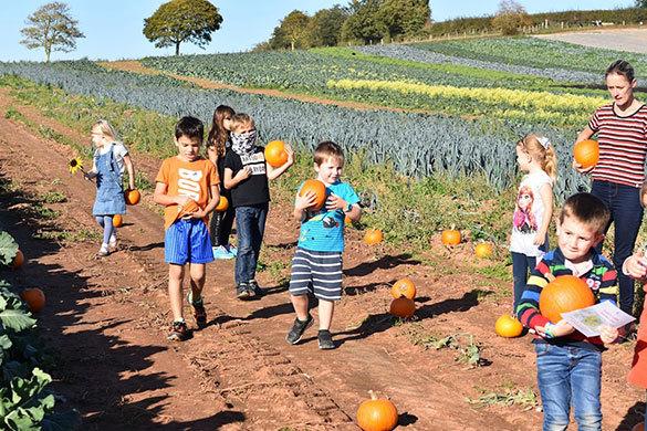 Darts Farm Pumpkin Festival