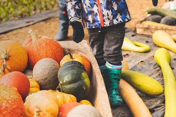 Riverford Farm Pumpkin Day
