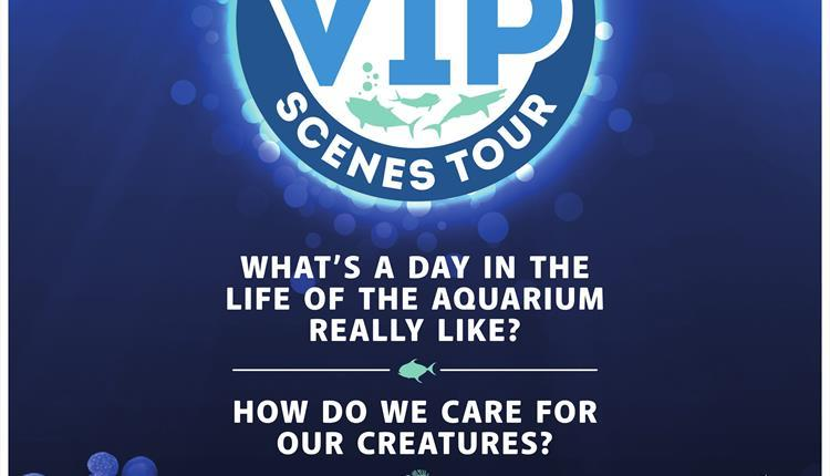 Behind the Scenes VIP Tour at the National Marine Aquarium